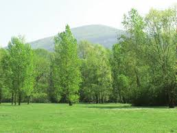 Bois de Vernaz 2